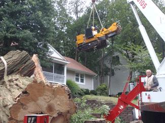 tree service/ tree removal